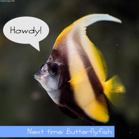 butterflyfish hello