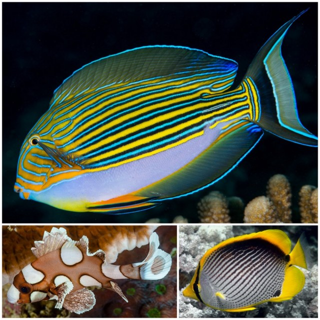 Examples of markings on Fish