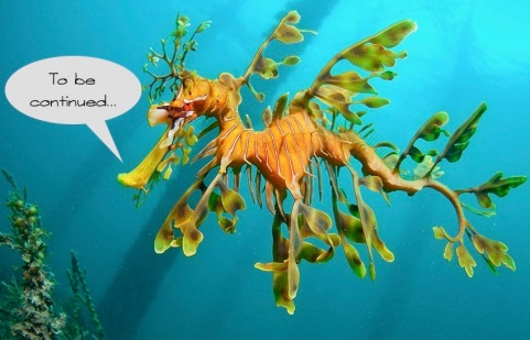 Leafy-Sea-Dragon---Rapid-Bay-Smaller_WEB 2