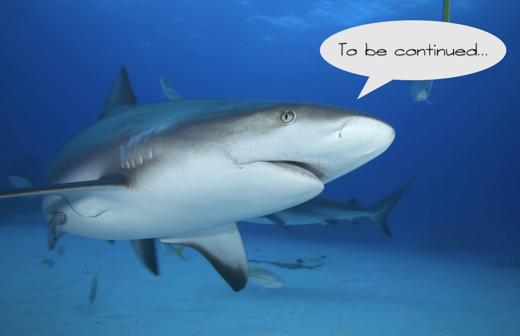 Grey Reef Shark/carcharrhinus Perezi